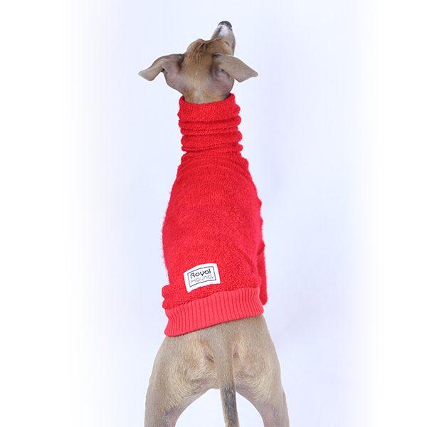 Clothing for Italian Greyhounds   Iggy Clothing   Royal Hound Melbourne