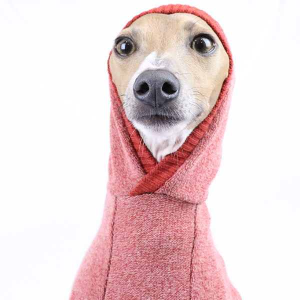 Italian Greyhound Clothing - Hoodie in navy, ochre and charcoal | Royal Hound
