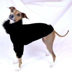 Italian Greyhound Clothes | Iggy Clothes | The Audrey | Royal Hound