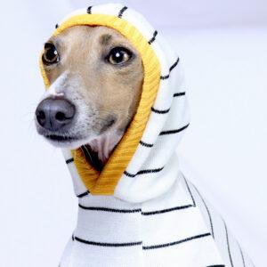Bolton Stripe Half Suit Hoodie | Italian Greyhound Clothing | Royal Hound