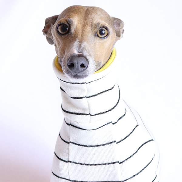 Bolton Stripe Turtleneck for Italian Greyhounds & Whippets | Royal Hound