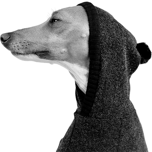 Italian Greyhound Clothing | Iggy Clothing | Royal Hound