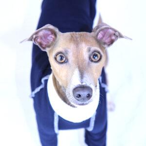 Italian Greyhound Clothing | Royal Hound | Whippet Clothing