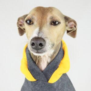 Italian Greyhound Clothing | Whippet Clothing | Iggy Wear