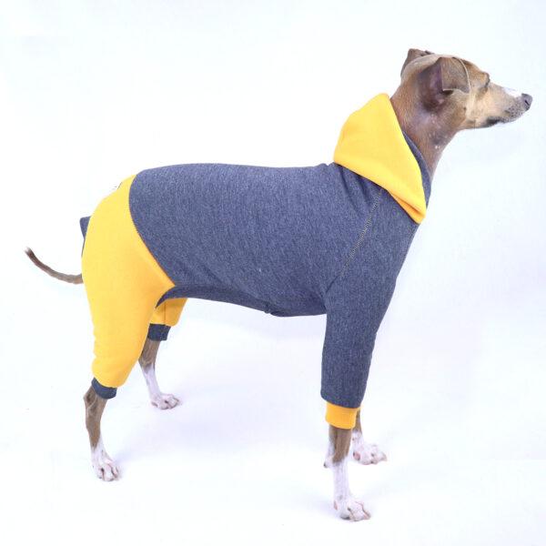 Full Suit Italian Greyhound Clothing   Iggy Clothing   Royal Hound Melbourne