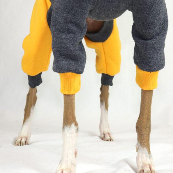 Italian Greyhound Clothing