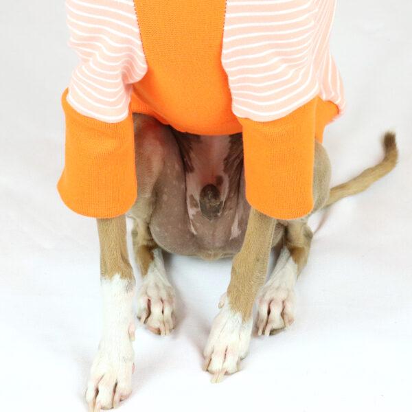 Italian Greyhound Clothing | Primavera