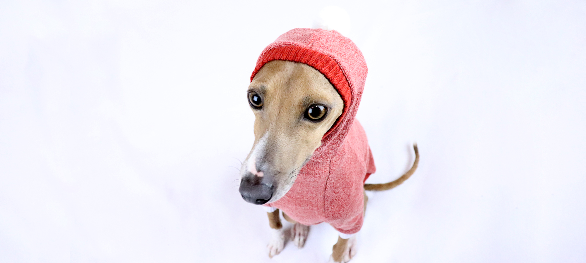 Whitehaven Italian Greyhound Clothing and Whippet Clothing