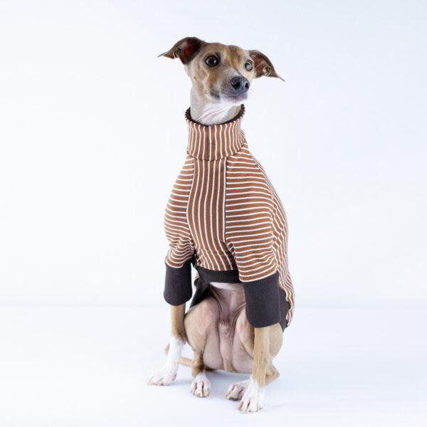 Italian Greyhound Clothing | Royal Hound | Melbourne
