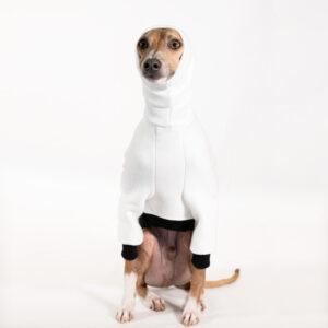 Italian Greyhound Clothing | Oscar & Ophelia