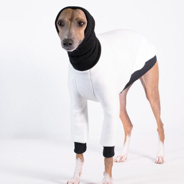 Italian Greyhound Clothing | Royal Hound