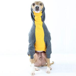Italian Greyhound Clothing - Riccardo